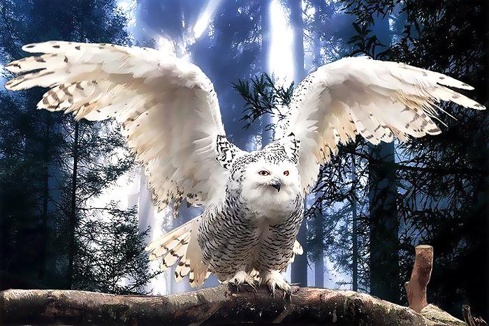 animal spirit quiz
