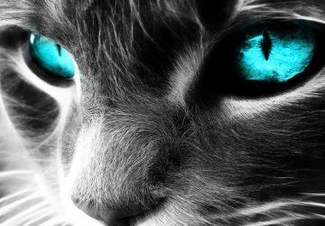 Cats Spiritual Protectors