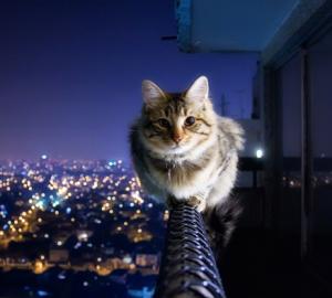 Cat symbolism