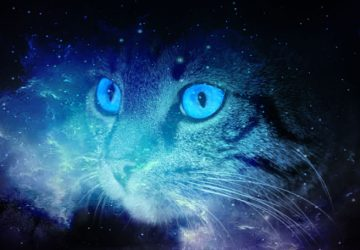 Cats spiritual energy
