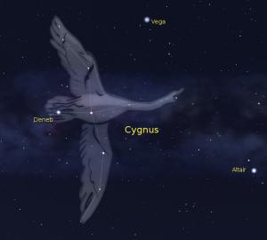 Cygnus Starseed