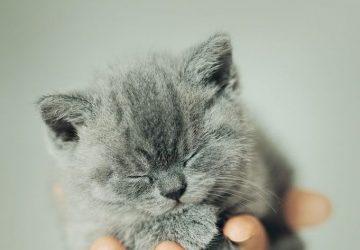 Grey Cat Symbolism
