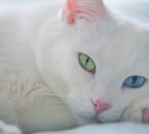 White Cat Dream Meaning
