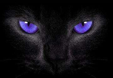 Black Cat Symbolism