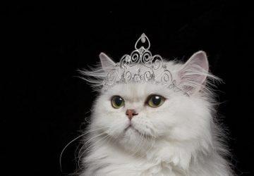 White Cat Spiritual Meaning