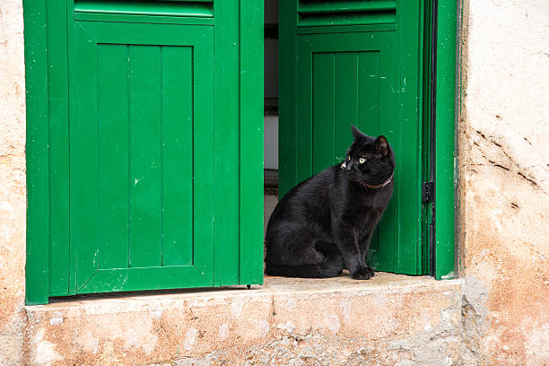 Meaning Of A Black Cat At Your Door