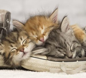Kitten Dream Meaning