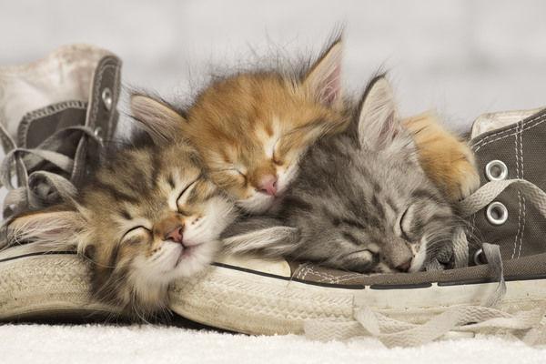 Kitten Dream Meaning