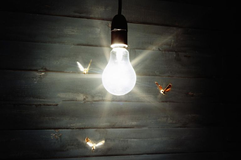 Moth Spirit Animal - Find the light