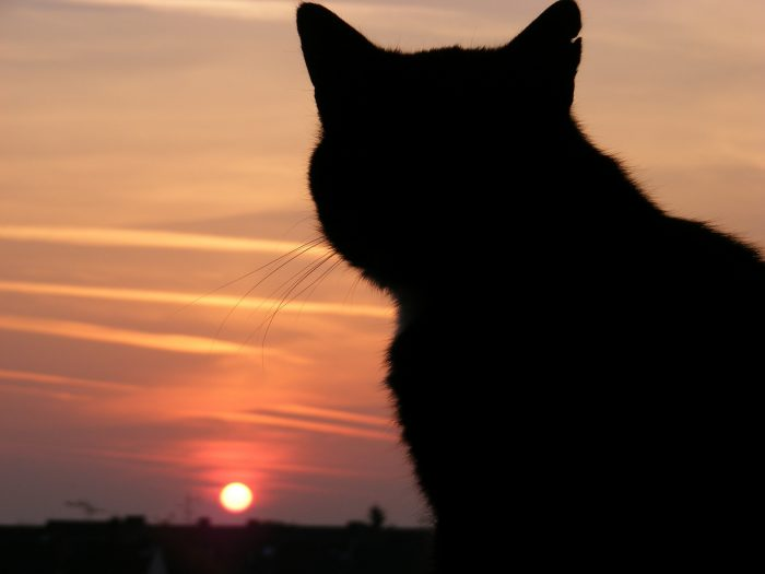 Cat Crying At Night Spiritual Meaning